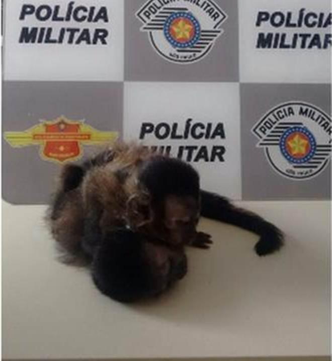 Homem é preso por tráfico de macacos em Catanduva, SP