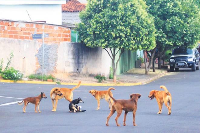Vereadores querem explicação sobre animais abandonados em Franca, SP