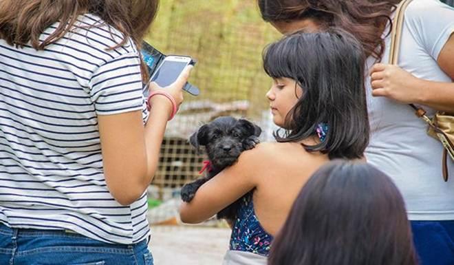 Campanha de adoção da CCZ de Itu (SP) doa 21 animais