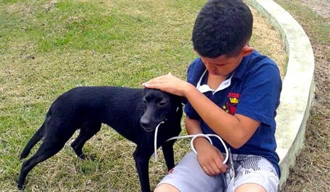 Centro de Controle de Zoonoses de Itu (SP) realiza campanha de adoção neste sábado