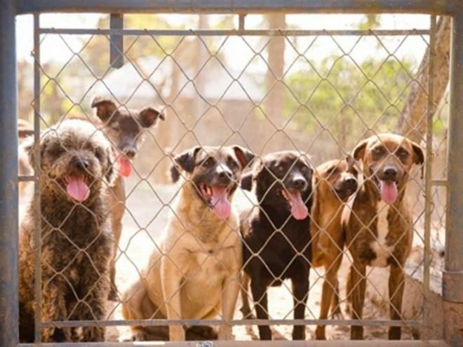 ONG de Itu (SP) que abriga cerca de 400 cães, burro e até cavalo pede doações