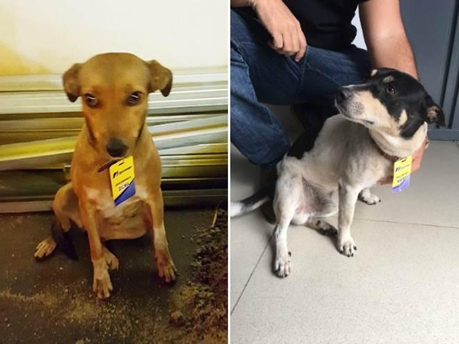 'Nunca atacaram', diz tutor de cães agredidos em posto de combustível em Jardinópolis, SP