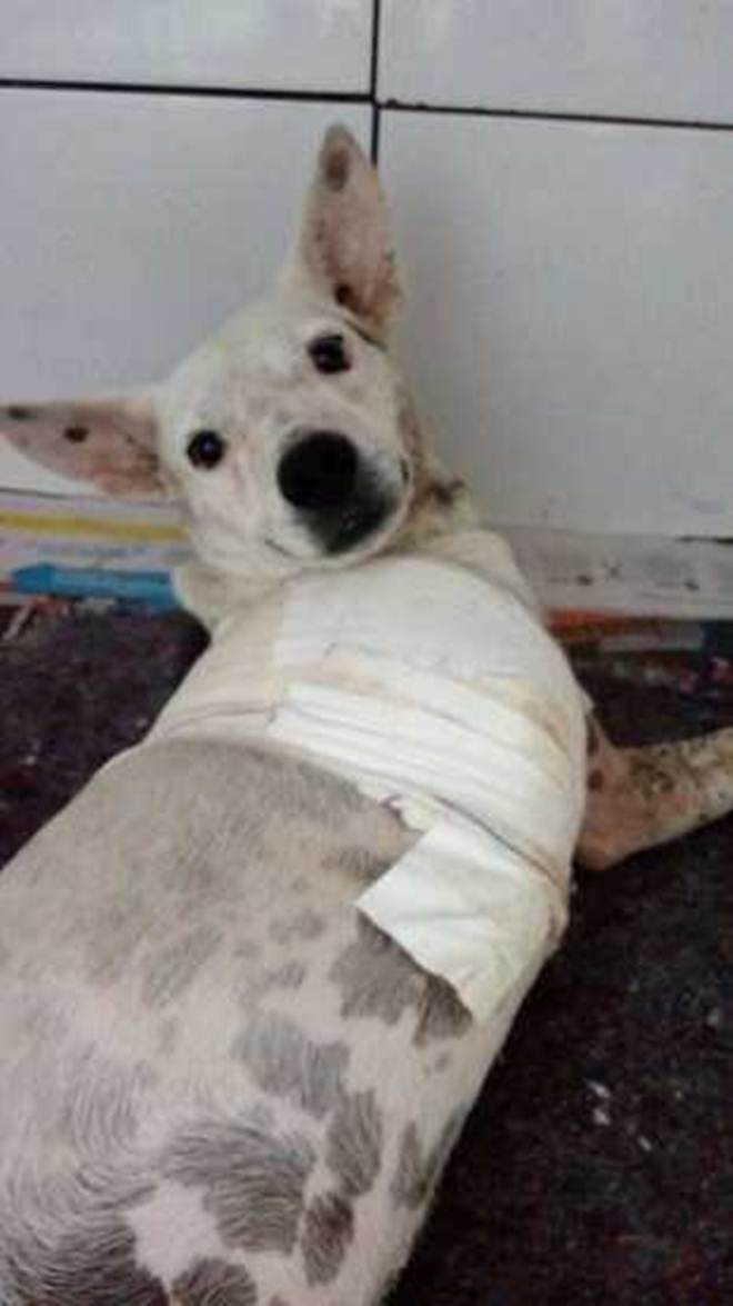 Cachorro tem a perna decepada com golpes de facão em Lorena, SP