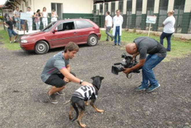 Parceria entre time de futebol e canil municipal de Piracicaba (SP) ganha repercussão nacional