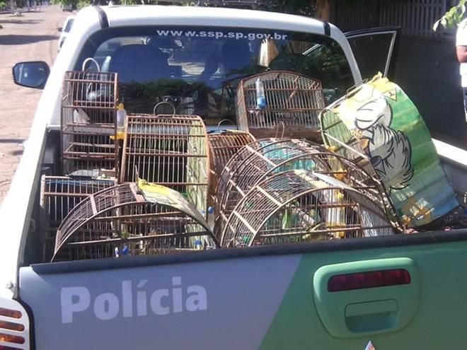 Polícia recupera 16 aves mantidas em cativeiro e multa homem em R$ 9,7 mil em Presidente Epitácio, SP