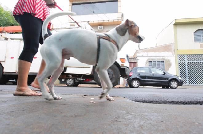 Ribeirão Preto (SP) perde delegacia especializada em crimes contra animais