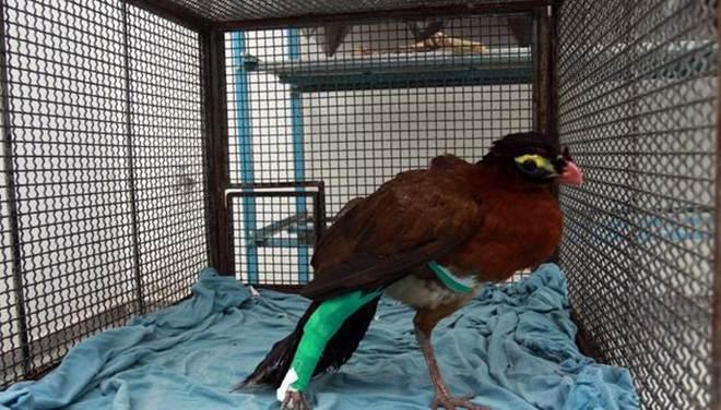 Morre o sexto animal vítima de ataque no Bosque em Rio Preto, SP