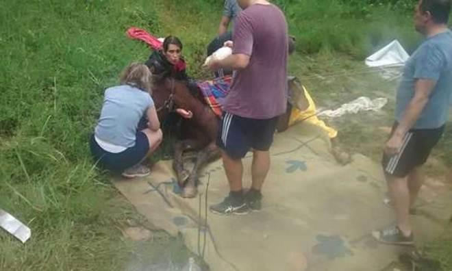 População se mobiliza para salvar égua em Santo André, SP