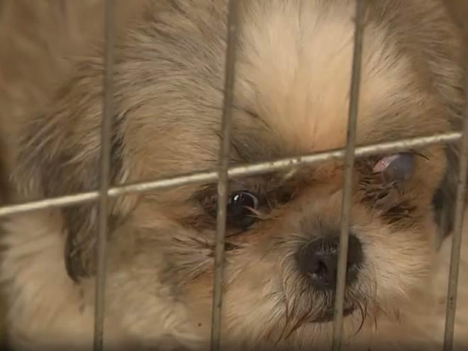 TJ determina devolução de animais resgatados para dono de canil em Santo Antônio de Posse, SP