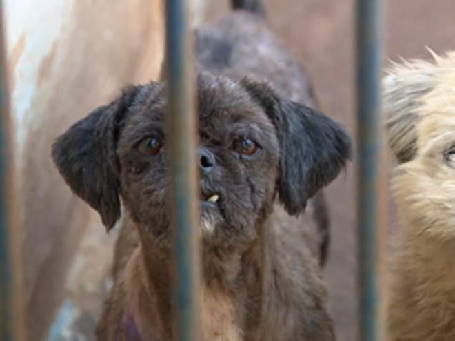Canil é multado no interior de SP por falta de alvará e terá de transferir cães