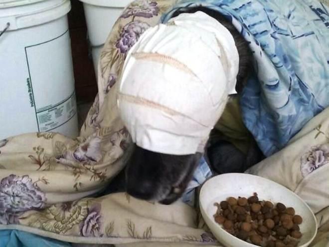 Cadela que perdeu uma das pálpebras ganha implante pioneiro no Brasil