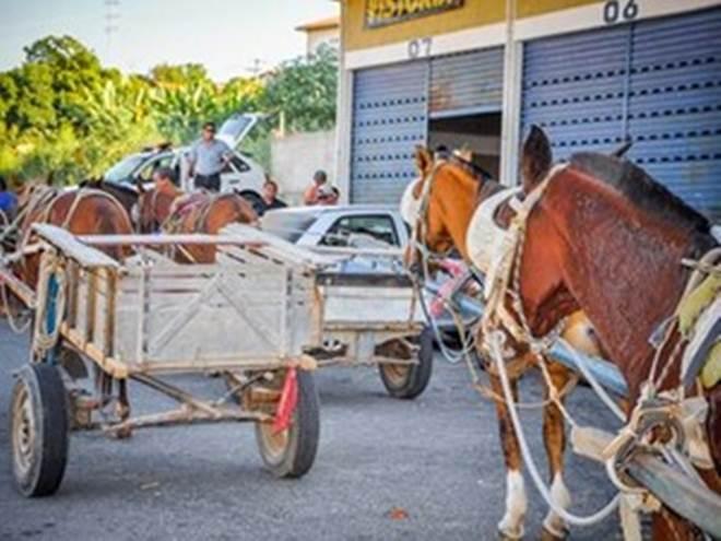 Taubaté (SP) vai multar em até R$ 551 casos de maus-tratos contra animais