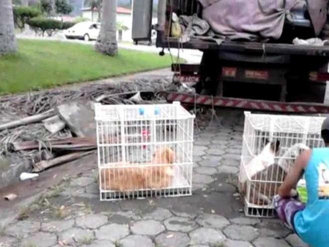Três cães morrem durante viagem para Ubatuba (SP) em caminhão baú