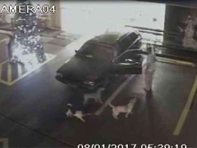 Homem agride cachorros e deixa um cego em posto de Jardinópolis, SP; veja vídeo