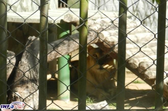 Estado de Sergipe deve apresentar Centro para animais silvestres