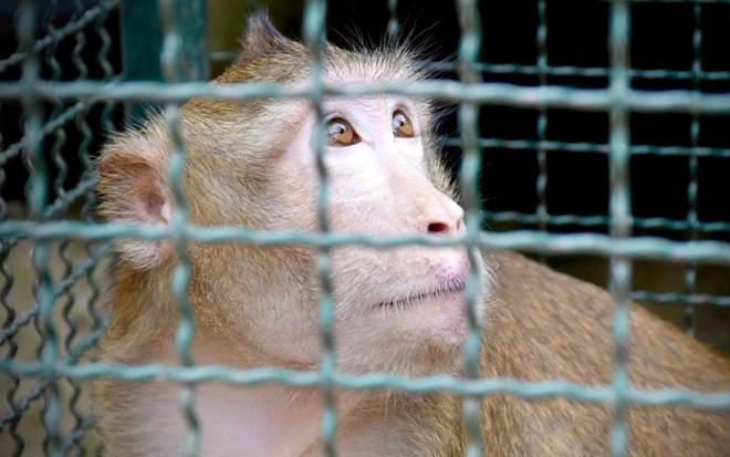 Macaco de estimação que viveu em jaula por 5 anos e nunca teve nome finalmente é salvo!