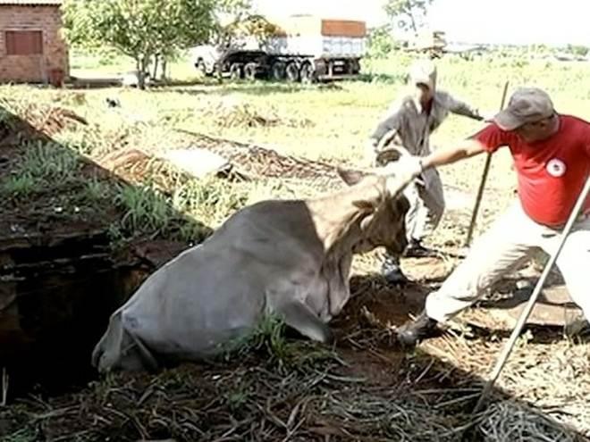 Bombeiros resgatam vaca após cair em fossa no sul do Tocantins