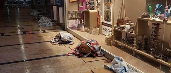 Centro comercial turco abriga cães de rua em noite de frio extremo