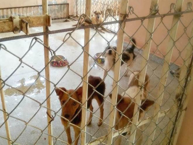 Com enchente, 23 animais são abrigados em Centro de Zoonoses de Cruzeiro do Sul, AC