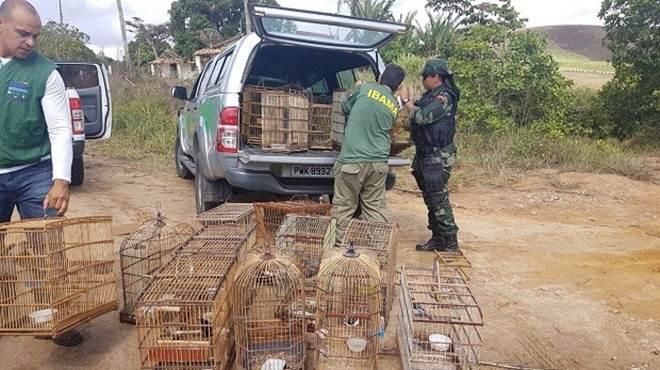 Cerca de 200 animais são resgatados durante operação do IMA em Alagoas
