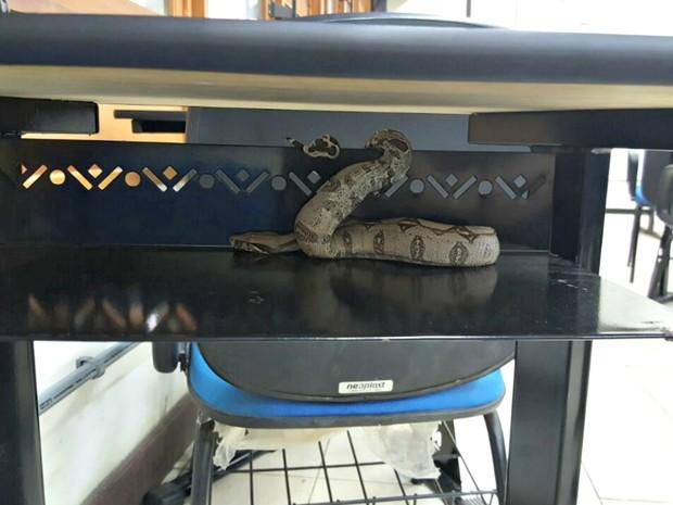 Alunos são surpreendidos por cobra dentro de sala em universidade no AM