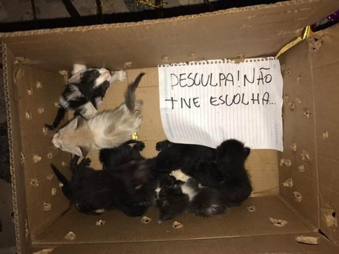 Gatos são abandonados em casa de protetor com pedido de desculpas: 'Não tive escolha'