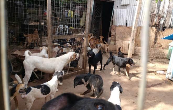 Acumuladores de animais chegam a ter mais de 100 bichos em casa; patologia ainda é pouco estudada