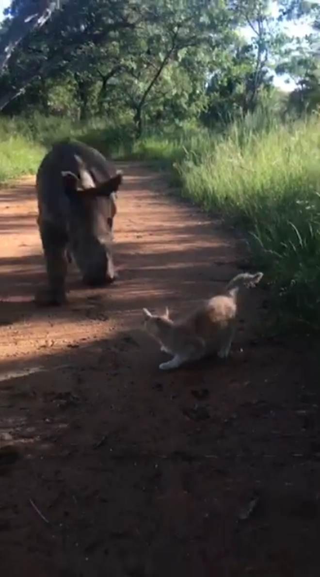 Amizade entre rinoceronte órfão e gato conquista as redes sociais