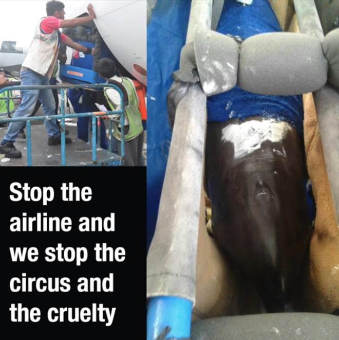 Aja agora para parar o envio cruel de golfinhos cativos por linhas aéreas!