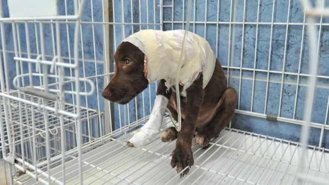 Argentina: suposto assassino do cão Chocolate é detido
