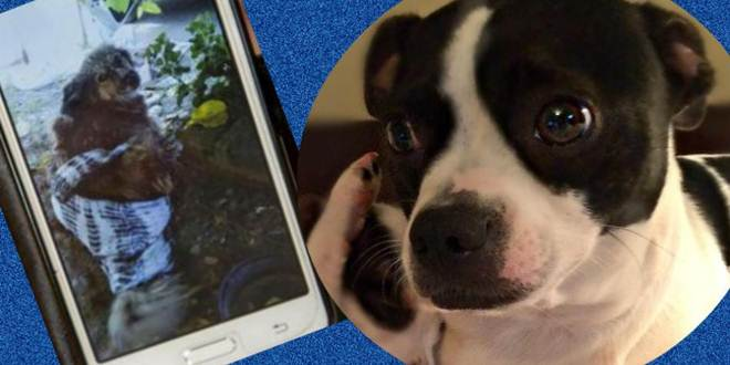 Argentina: homem vestia cães como mulheres e depois os violentava