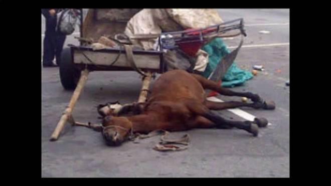 Jovem que circulava em uma charrete maltratando ao cavalo é detido em Paraná, na Argentina