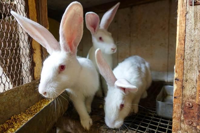 Assine a petição pedindo que a Avon pare de realizar testes em animais!