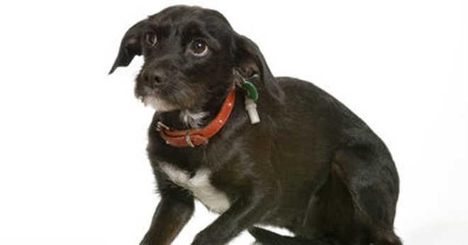 Saiba como agir se conhecer casos de maus-tratos contra animais