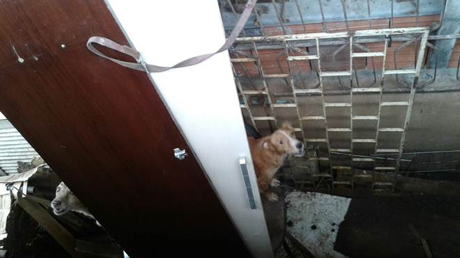Mulher é acusada de maus-tratos contra animais na periferia de Fortaleza, CE