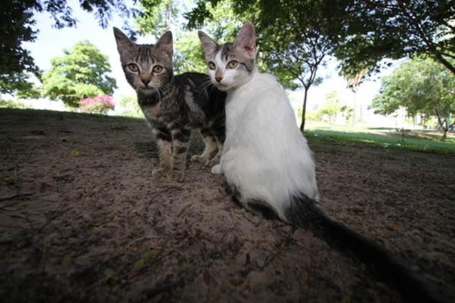 Vacinação de cães e gatos é oferecida gratuitamente em todas as regionais de Fortaleza, CE