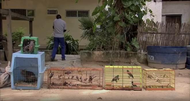 Ibama devolve à natureza animais capturados ilegalmente no Ceará
