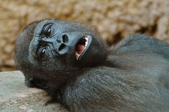 Turista denuncia zoológico chinês por animais extremamente debilitados