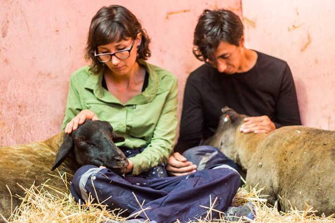 Resgatistas não medem esforços para salvar duas ovelhas de incêndio devastador no Chile
