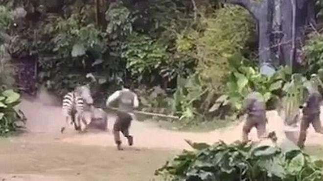 Zebra ataca tratador e assusta visitantes de zoológico na China; vídeo