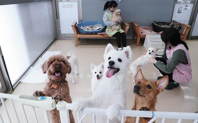 Abrigos de animais na Coreia do Sul lutam para atender a enorme demanda
