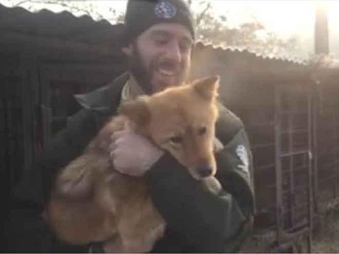 Vídeo captura o momento que um cão destinado ao matadouro experimenta a doce liberdade
