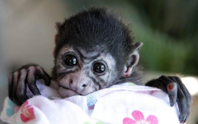 Macacos correm sério risco devido aos fios de alta tensão - mas estas pessoas se recusam a deixá-los morrer