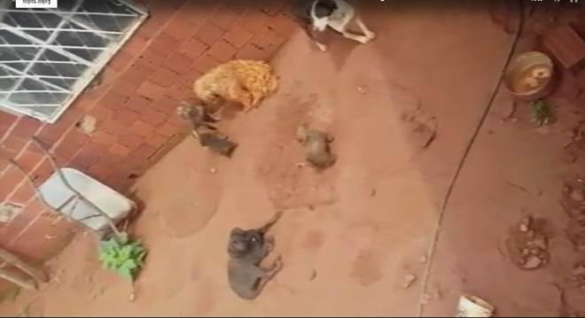 Morador do Gama, no DF, é autuado por maus-tratos a cachorros; vídeo