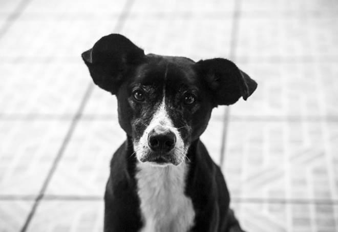 Cachorro abandonado em casa preocupa moradores do Guará, DF