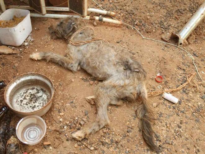 Governo do DF tem 90 dias para criar disque denúncia contra maus-tratos a animais