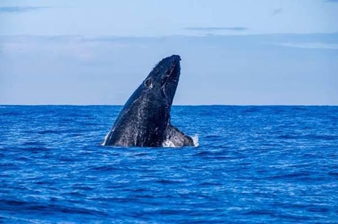 Vitória (ES) terá centro de pesquisas sobre as baleias-jubarte