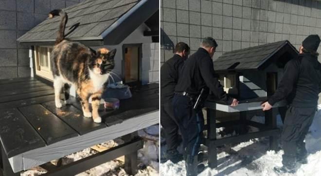 Policiais constroem Condo Hello Kitty para o gato que visitou a delegacia por 3 anos