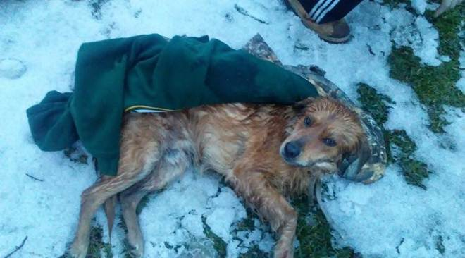 Cachorro atropelado esperou na neve por alguém que o salvasse