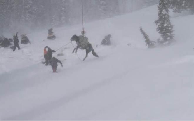 Confira este resgate épico de um cavalo preso em uma montanha a 2.300 metros de altura!